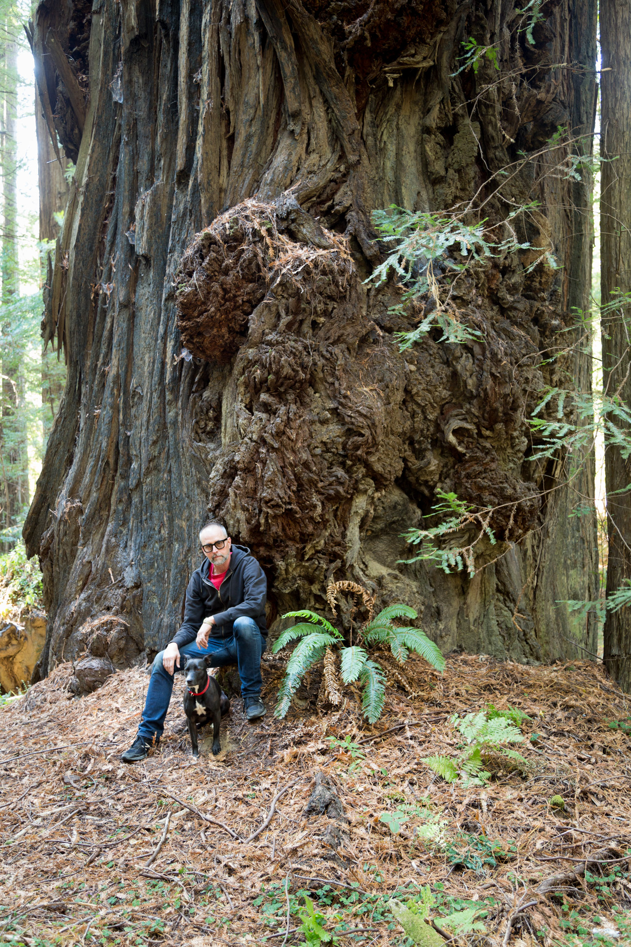 Man and dog with redwood tree