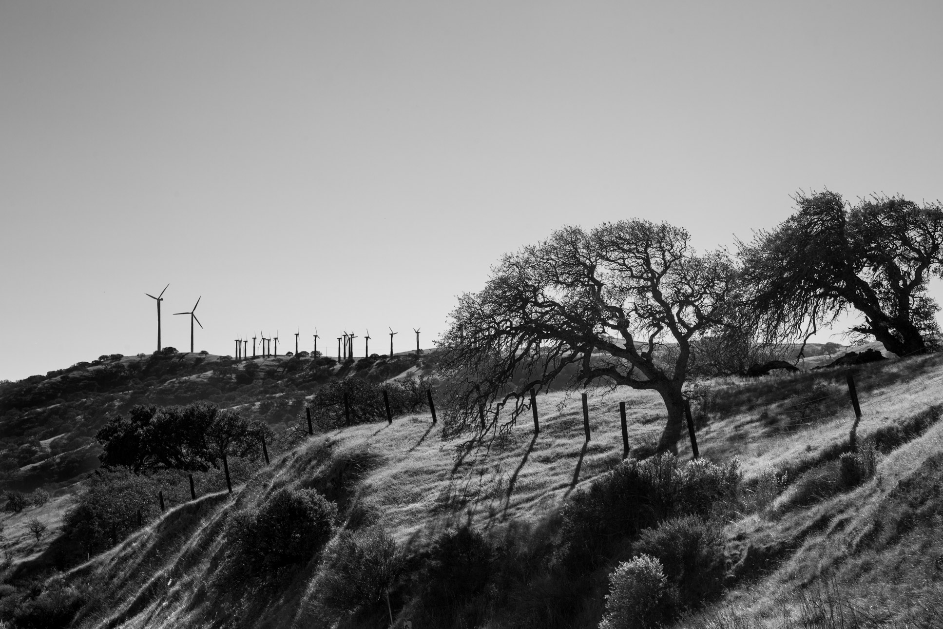 Windmills and Trees
