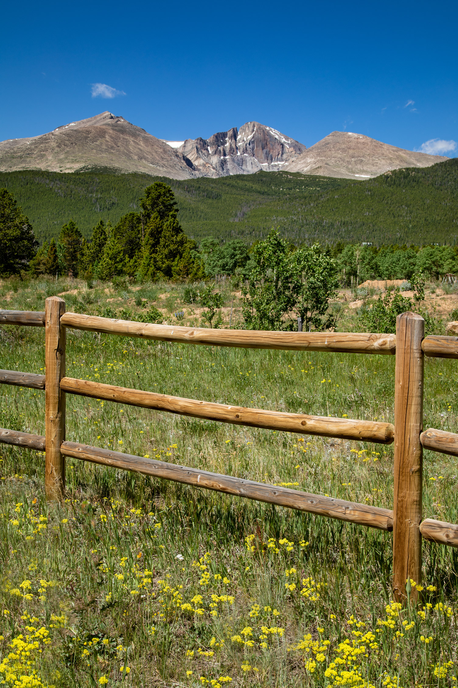 Wildflowers and Longs Peak in Colorado
