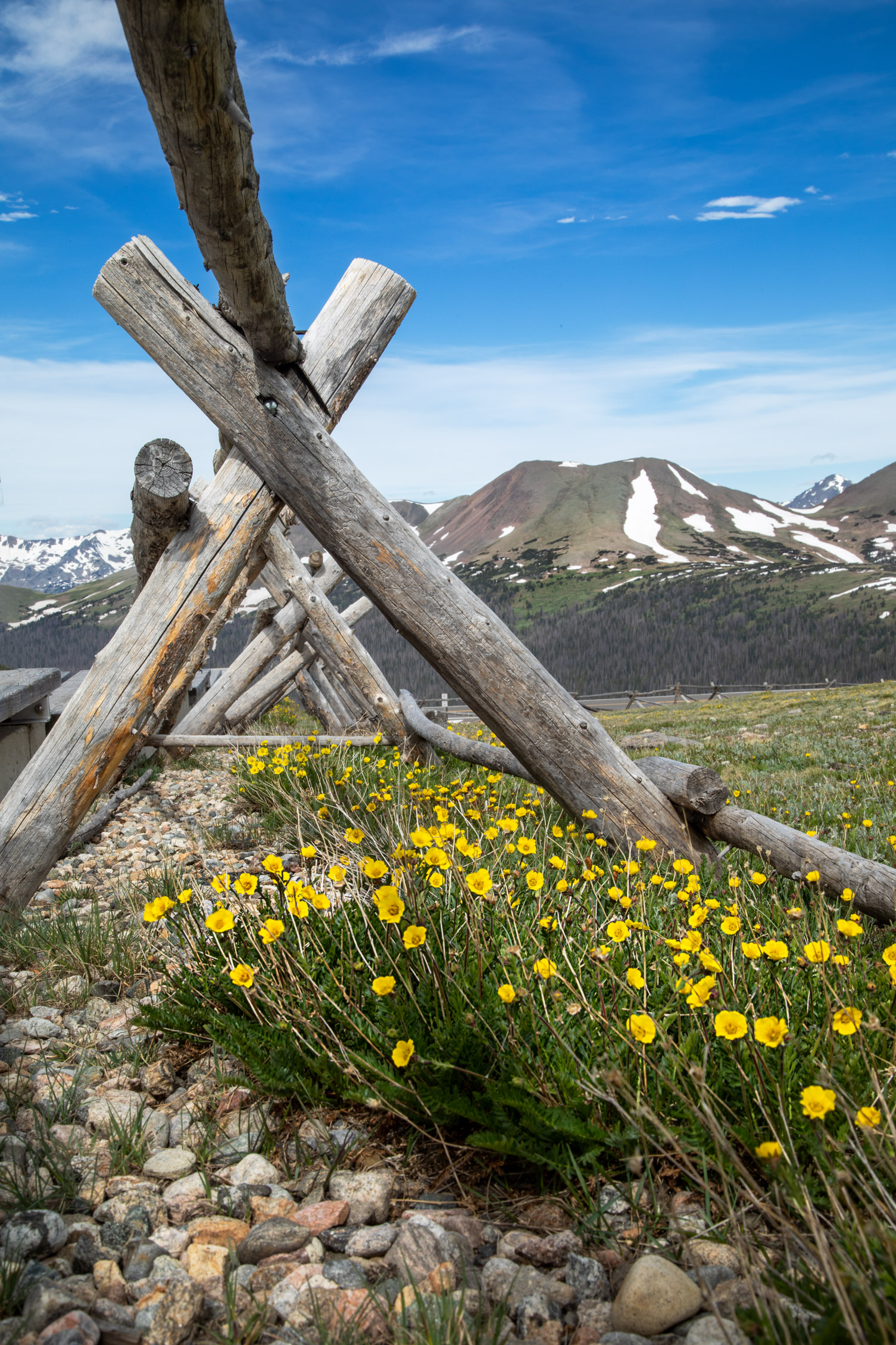 Wildflowers_Rocky_Mountain_National_Park_20C9282